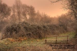 01 Amanecer neblinoso_1Premio